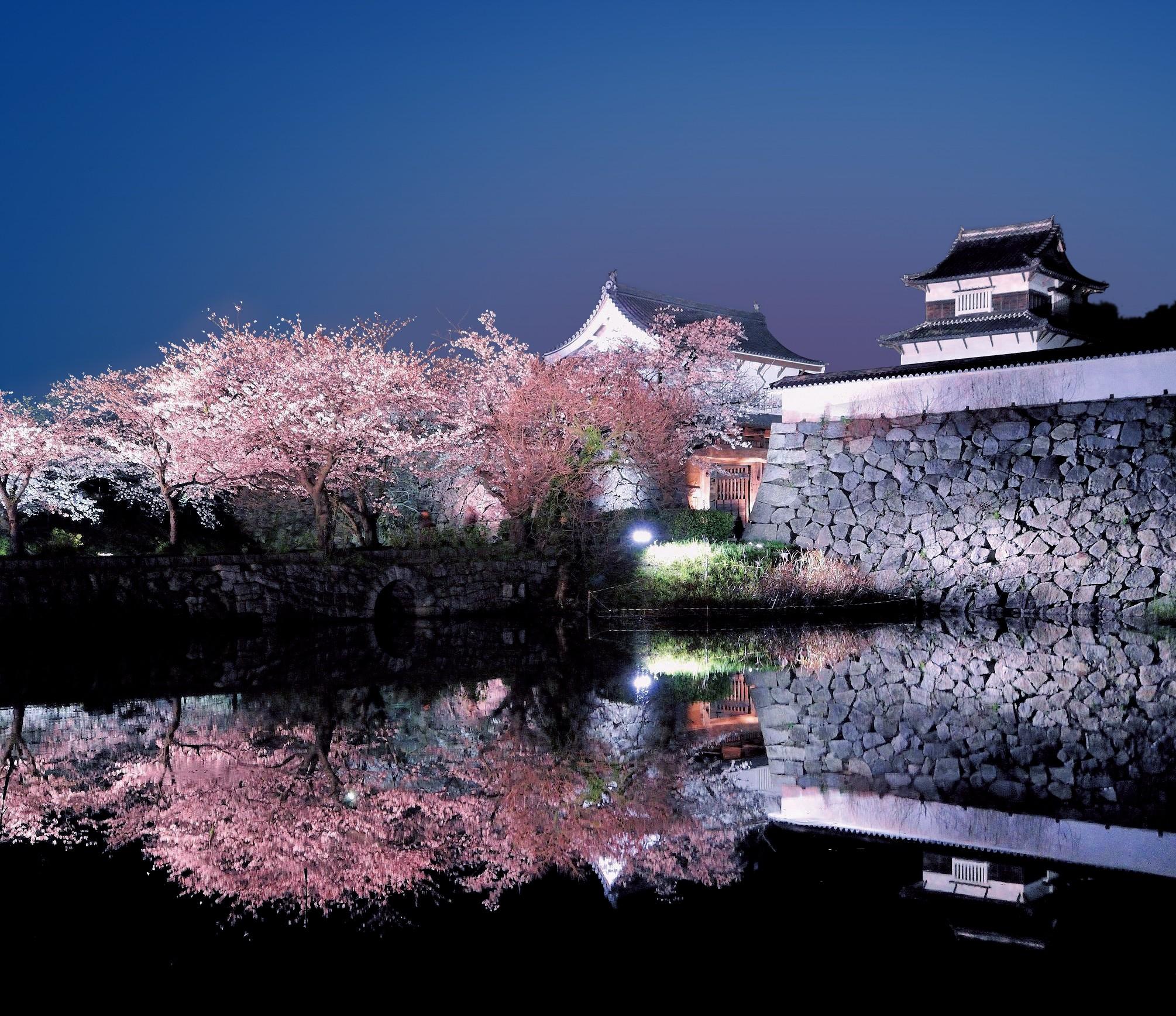 Fukuoka Castle Sakura Festival  Fukuoka Now