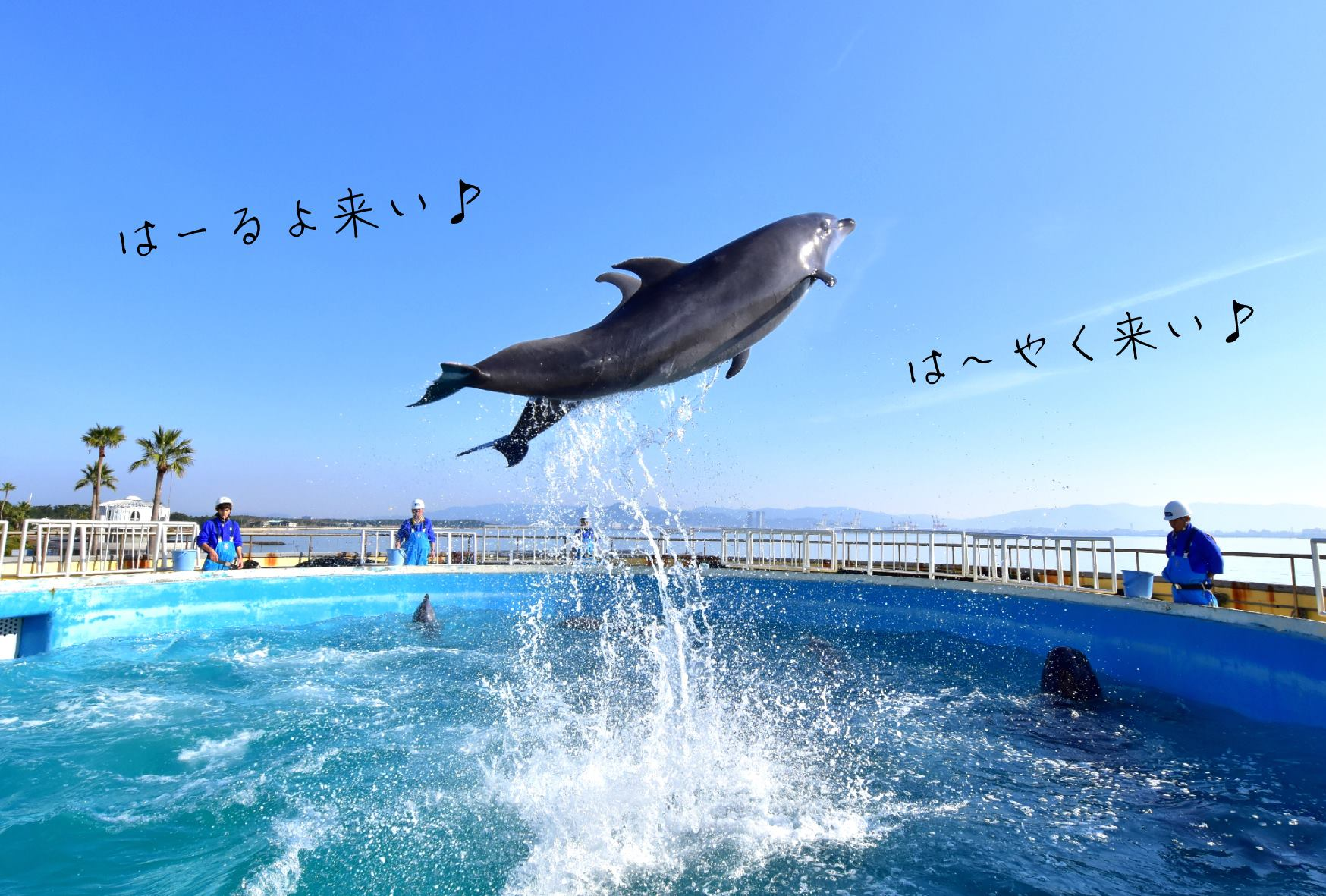 Marine World Uminonakamichi Re-Opening!  Fukuoka Now